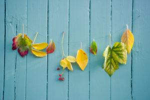 Autumn decoration with leaves garland